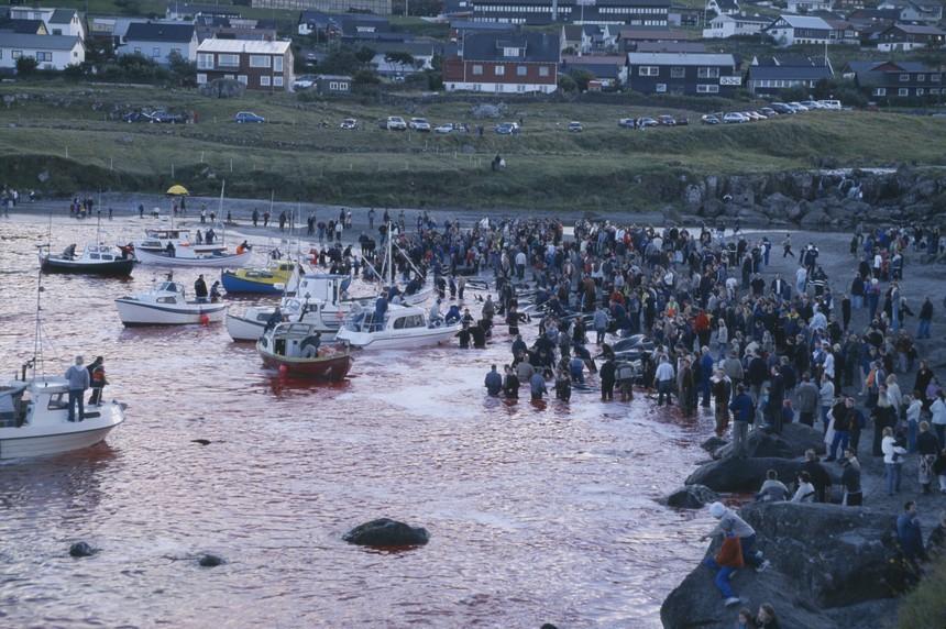 Massacre de Golfinhos.jpg