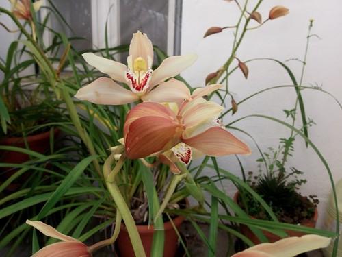 Orquídeas 2.jpg