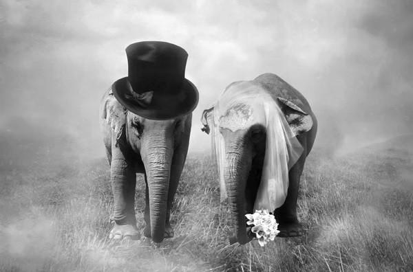 ElefantesCasamento.jpg