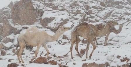 featured-saudi-arabia-snow-april-2018.jpg