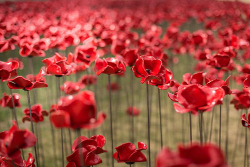 ceramic-poppies-tower-of-london-remembrance-day-ri