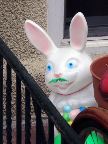 Mustache-rabbit.jpg