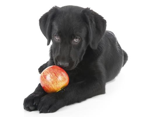 maçã.jpg