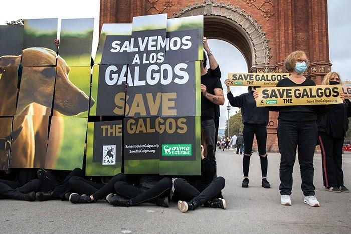 Salvemos os Galgos.jpg