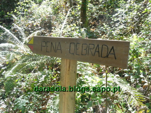 Oliv_Frades_Levadas_0048.JPG