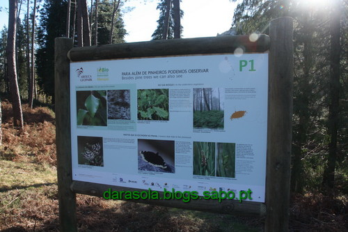 Biodiversidade_Freita_04.JPG