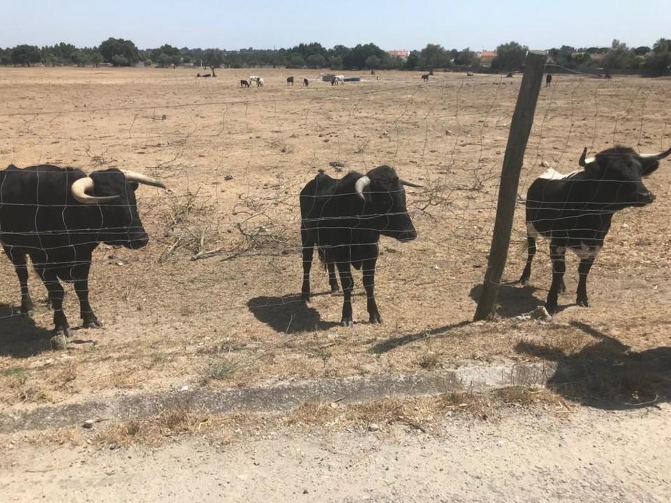 Animais abandonados na Moita.jpg