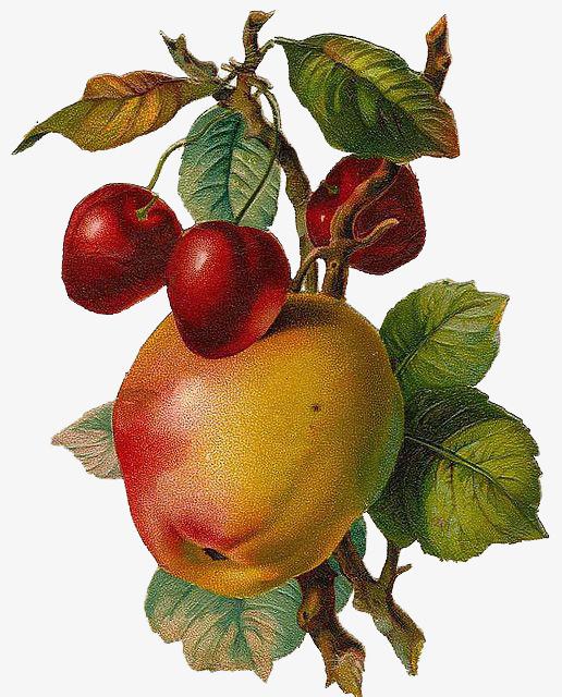 maçãs.jpg