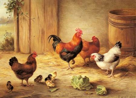 chickens-in-a-barnyard.jpg