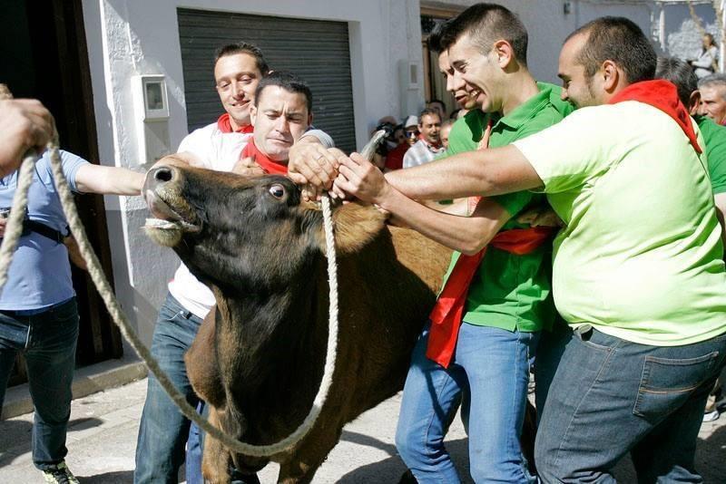 Vaca das cordas1.jpeg