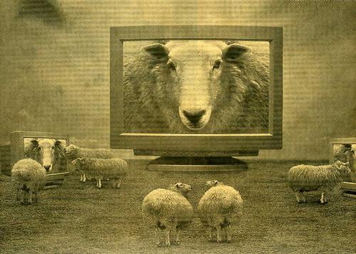 sheeptv.jpg