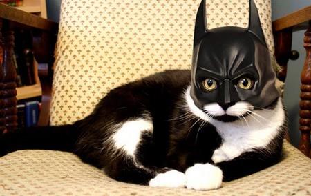 Fantasia-gato-batman.jpg