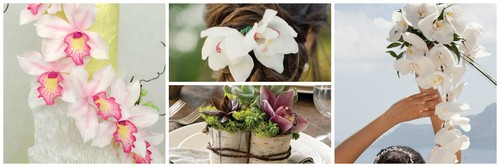 orquídea.jpg