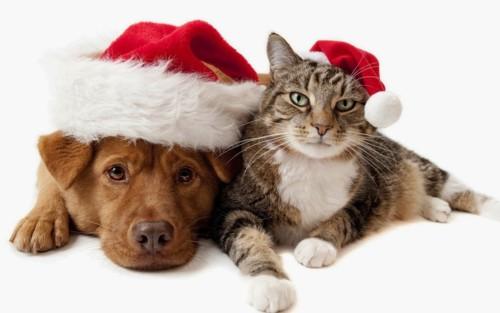 Natal canino e felino.jpg