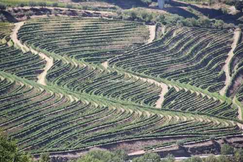 Vinhas do Douro...hs.JPG