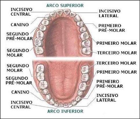Top Nome e números dos elementos dentais - OdontoGeral UL95