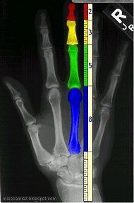 mão.jpg