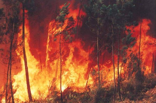 incendio-760869.jpg