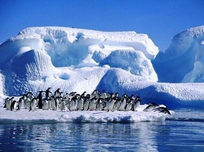 antártida-pinguis-gelo-alterações-climáticas.j