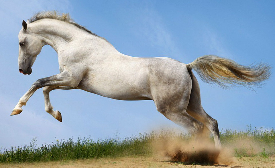 white-horse.jpg