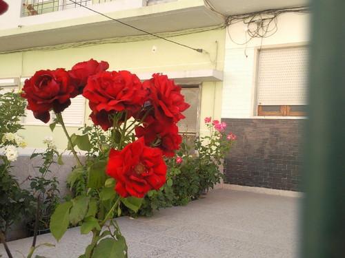 Foto original DAPL Rosas no Feijó 2015.jpg