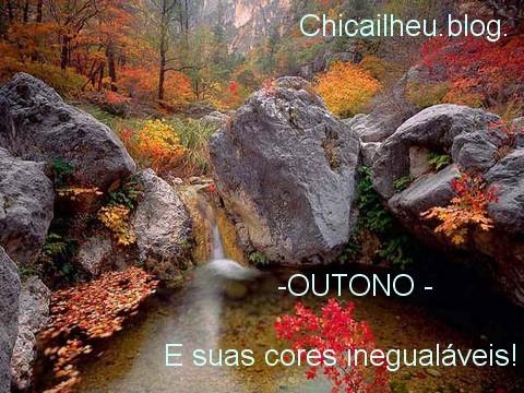 Outono espectacular2.jpg
