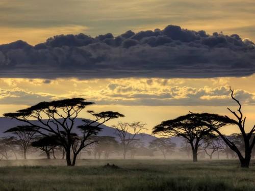 africa 3.jpg