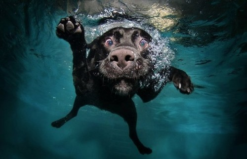 diving-dogs-photography.jpg