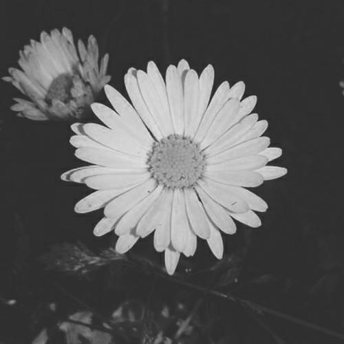 137_A3C_Flower.jpg
