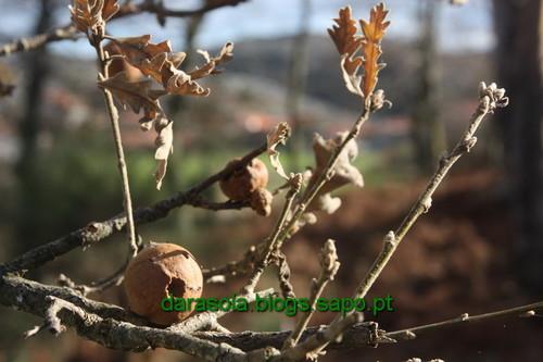 Biodiversidade_Freita_16.JPG