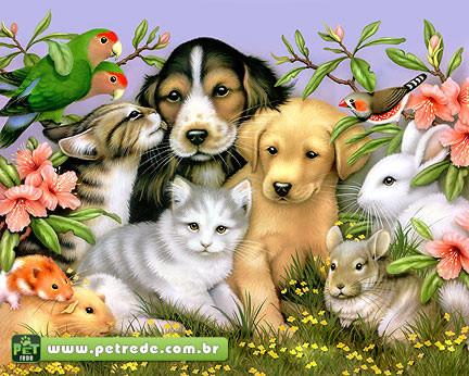 dia-dos-animais-petrede-02.jpg