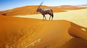 deserto5.jpg
