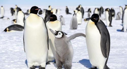 pinguins.jpg
