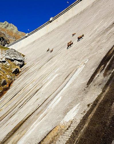 cabras ibex.jpg