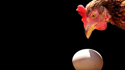 galinha2.jpg