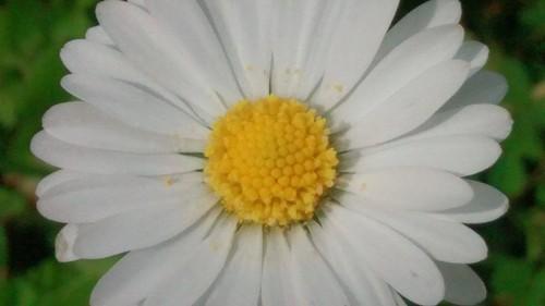 90_A3C_Geometria na flor.jpg