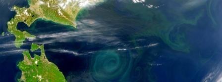 Plankton-article.jpg