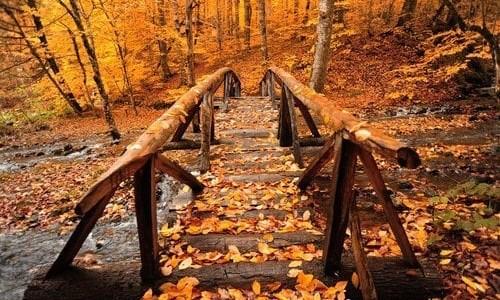 ponte.jpeg