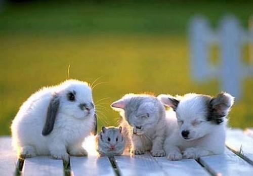 Todos amigos :)