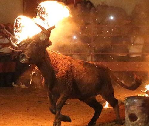 bull-on-fire1[1].jpg