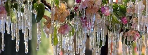 france-frost-aprl-9-2021.jpg