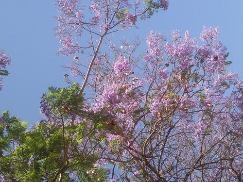 Foto original de DAPL - Esplendor da Primavera  2105.jpg