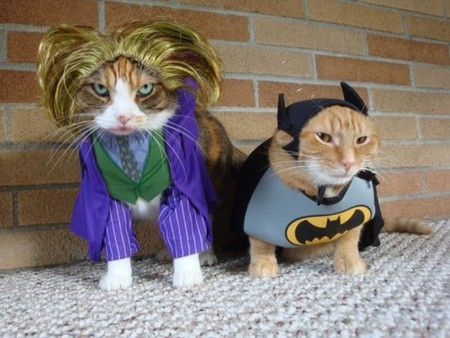 Gatos-Fantasiados-001-Batman.jpg