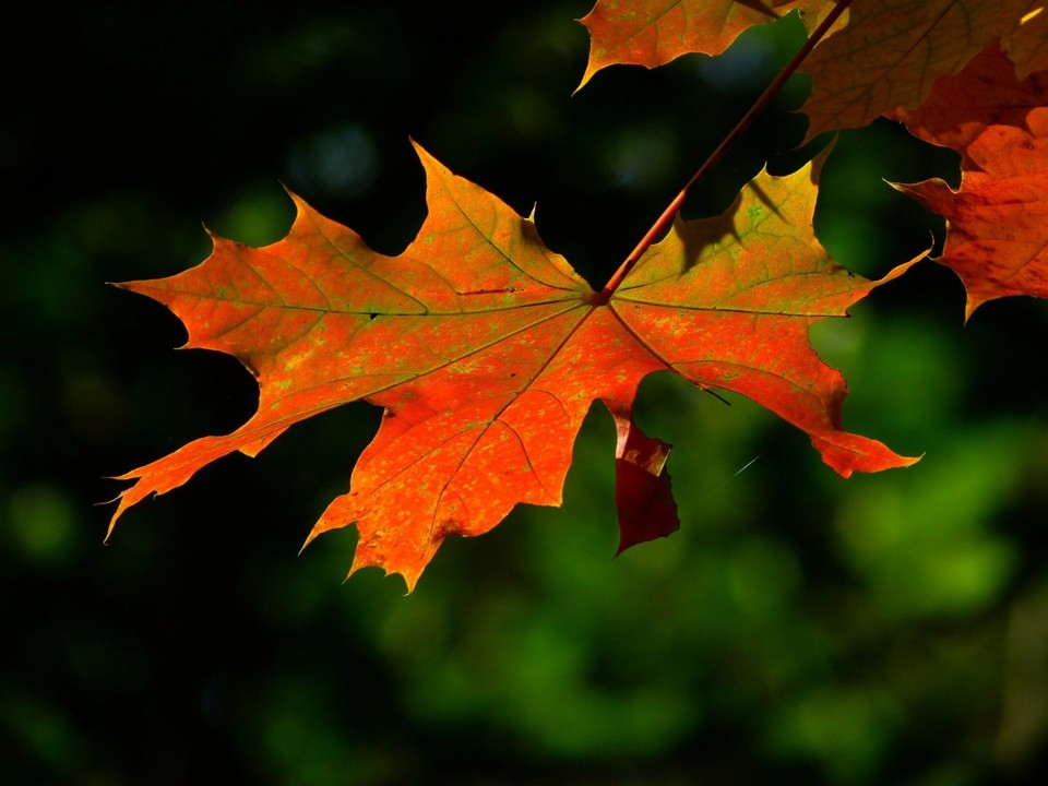 Estações de um Outono.jpg