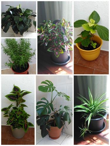 Plantas.jpg