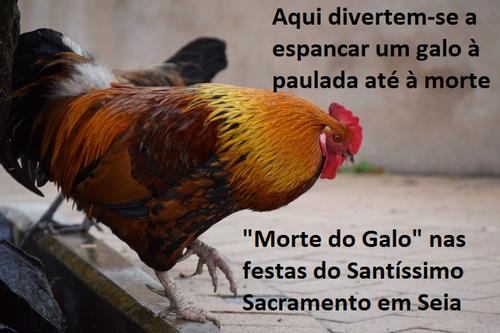 MORTE DO GALO.png