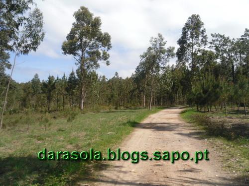 Arriba_Fossil_Esposende_09.JPG
