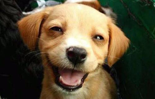 sorriso-cachorro02.jpg