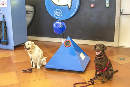 Caninos Pav.jpg