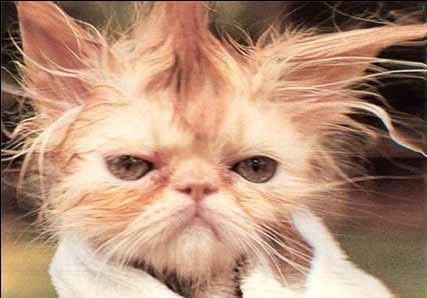 cabelo_gato.jpg